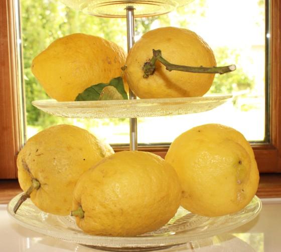 Zitronenkuchen_2680_bearbeitet-1